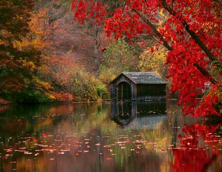 Autumn in Asheville, North Carolina (detail)
