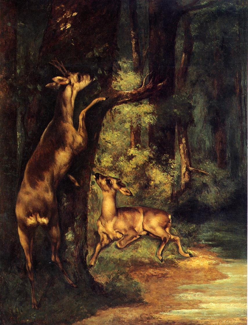Male and Female Deer in the Woods