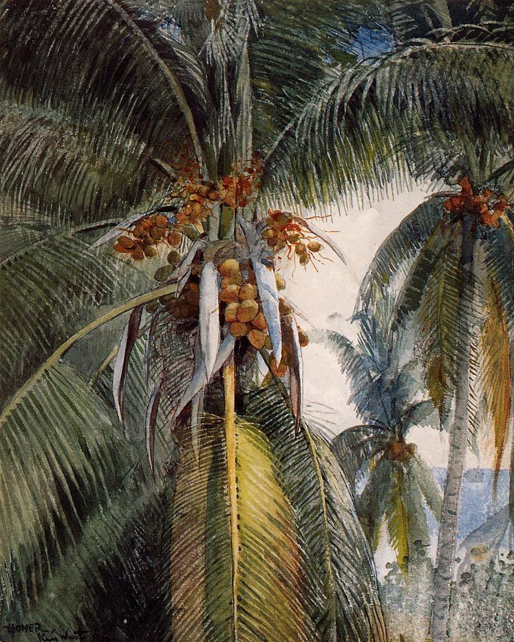 Coconut Palms, Key West