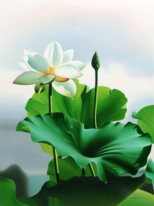 The lotus in full blossom and bud