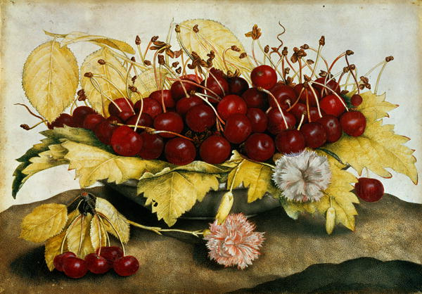 Cherries and Carnations