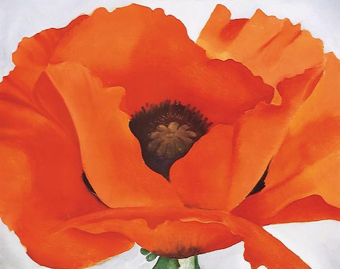 Red poppy mightylinksfo