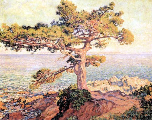 Pine by the Mediterranean Sea