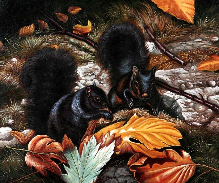 Squirrels in Black