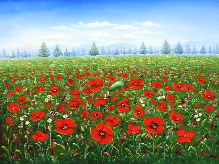 Red Poppy Fields