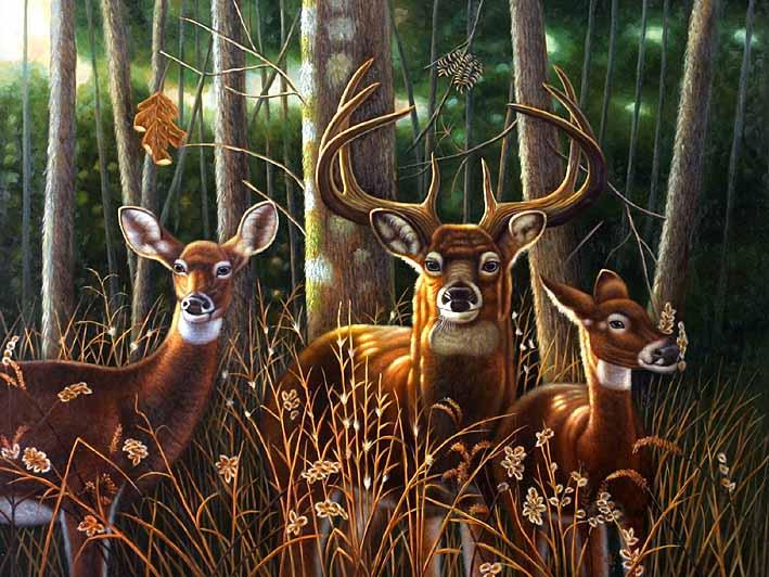 Attentive Deer, II